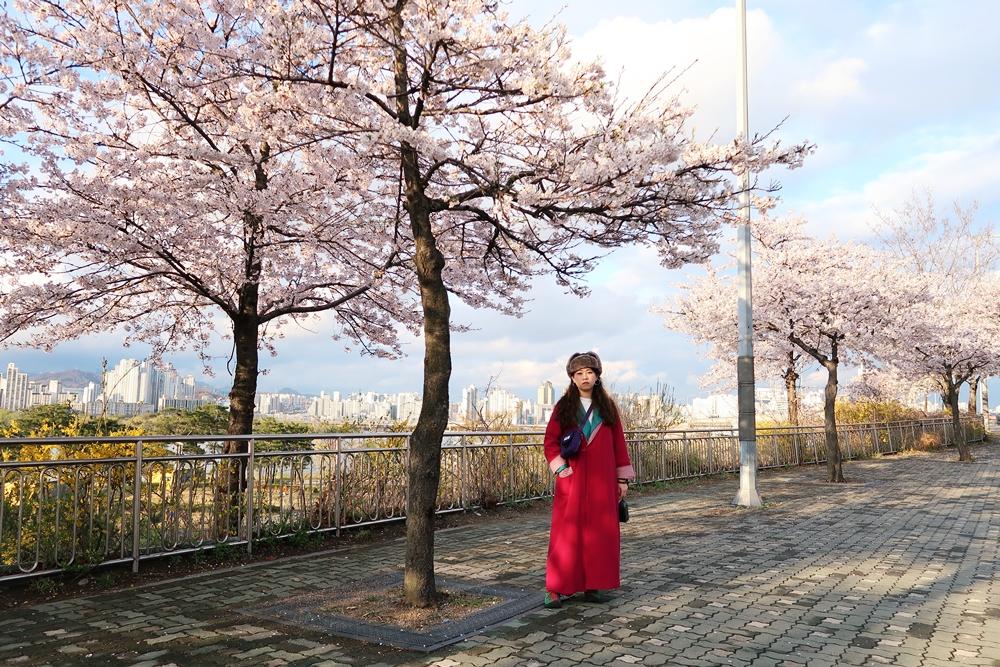 汝矣島漢江公園附近櫻花