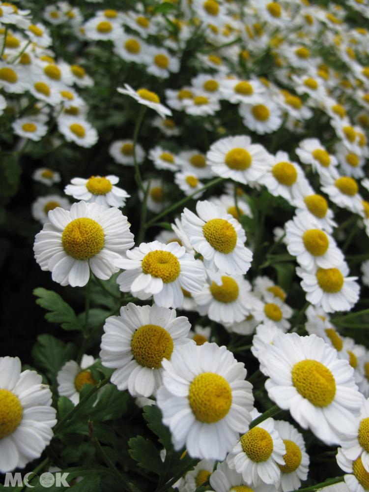 花園遵照約翰·納西1820年代的設計方案重建,花園內有很豐富的花種,悠閒的氛圍,在裡面散步覺得格外放鬆。