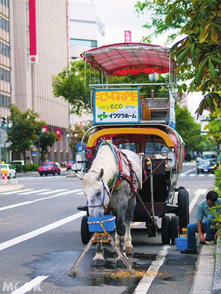 大通公園的札幌觀光幌馬車