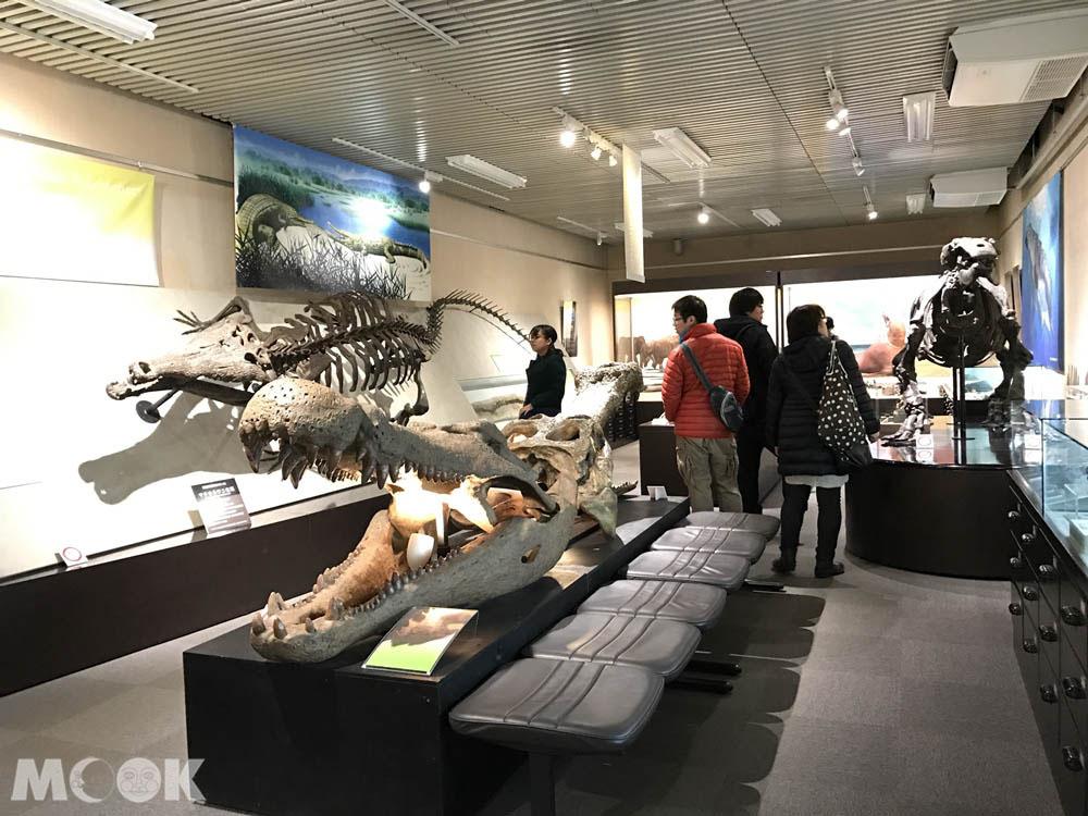 北海道大學的綜合博物館展覽