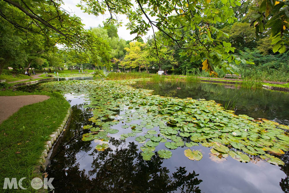 北海道大學的大野池