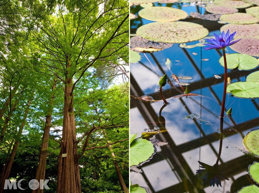 札幌北大植物園內的森林與溫室
