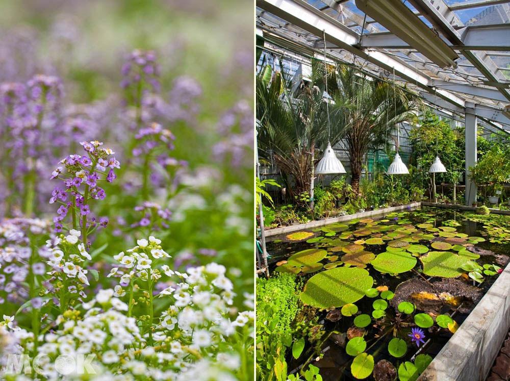 札幌必遊推薦的北大植物園