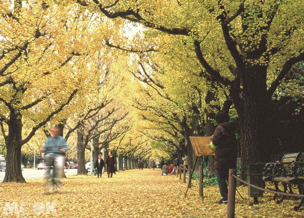銀杏行道樹