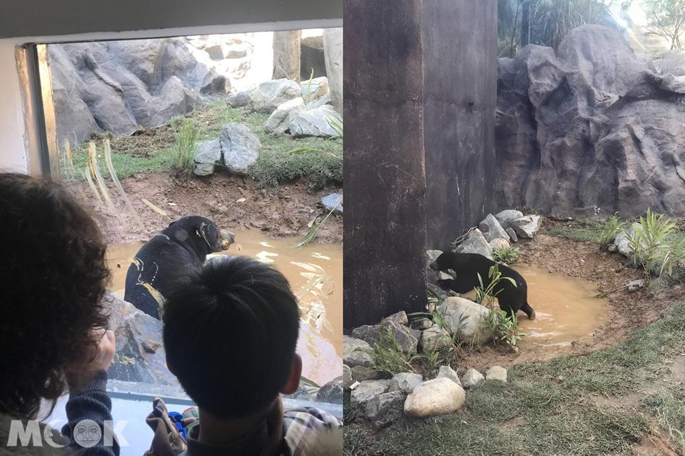台灣 新竹 北台灣 新竹市立動物園 馬來熊