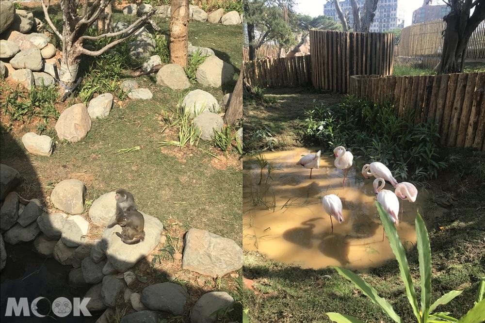 台灣 新竹 北台灣 新竹市立動物園 台灣獼猴 大紅鶴