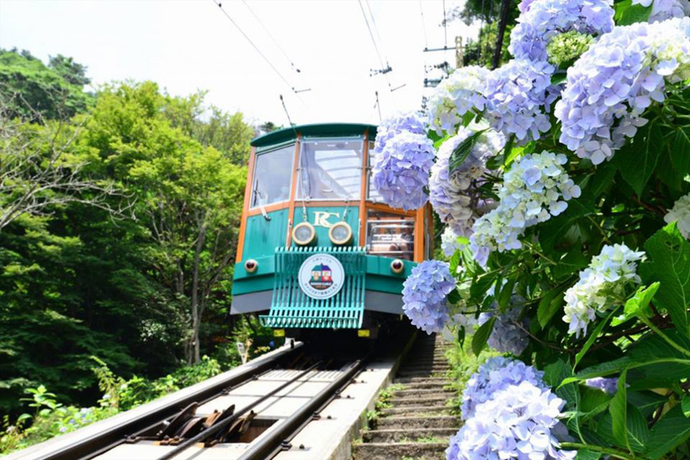 六甲山小火車與繡球花 (圖: Mt. Rokko National Park)