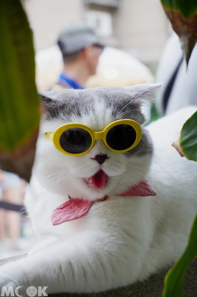 台灣台中市 台中市集 暮暮市集帶墨鏡的貓