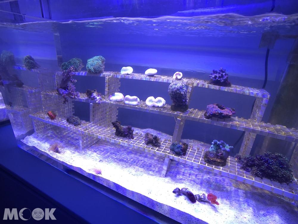 Xpark 珊瑚潛行