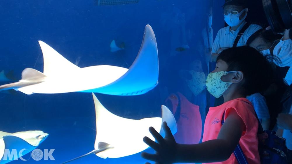 Xpark 暖海生機 魟魚