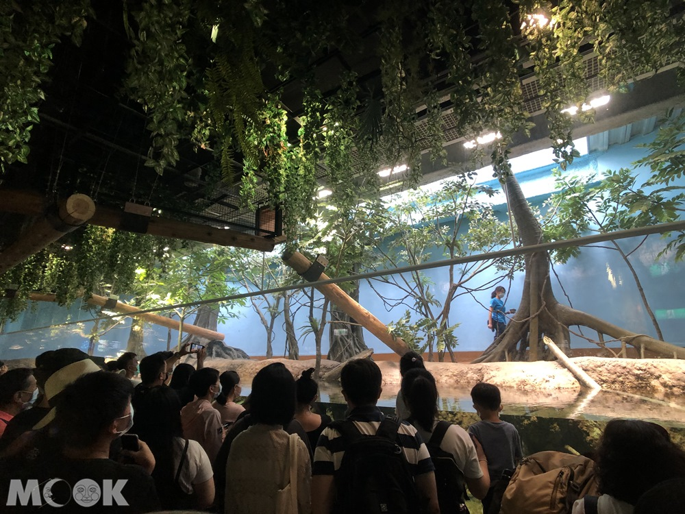 Xpark 雨林探險