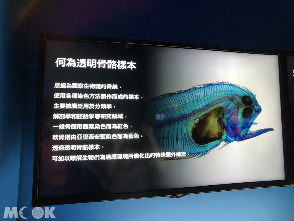 Xpark 深海尋覓 透明骨骼樣本