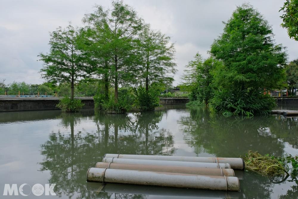 勝洋水草休閒農場 玩水