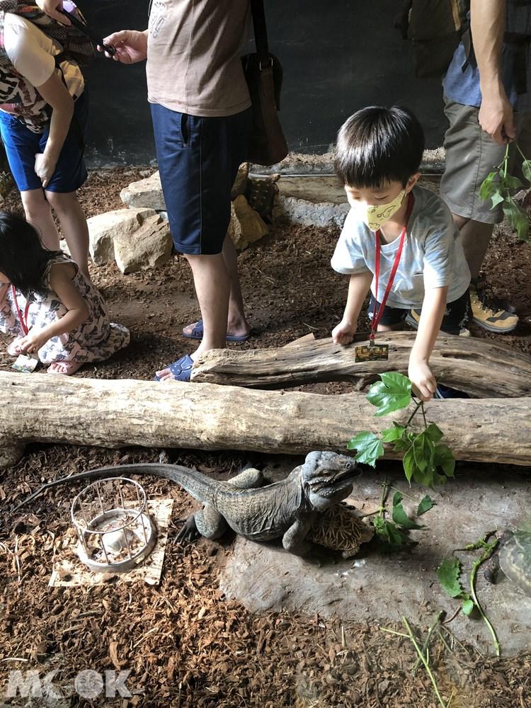 台灣昆蟲館 新竹館 餵食體驗