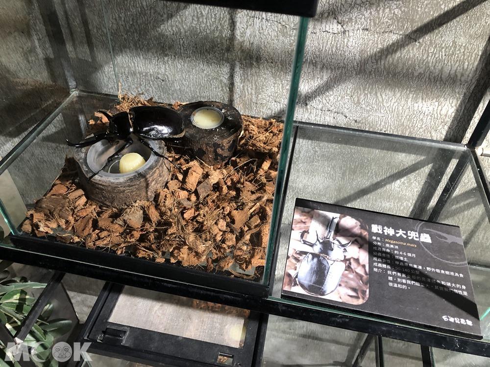 台灣昆蟲館 新竹館 戰神大兜蟲