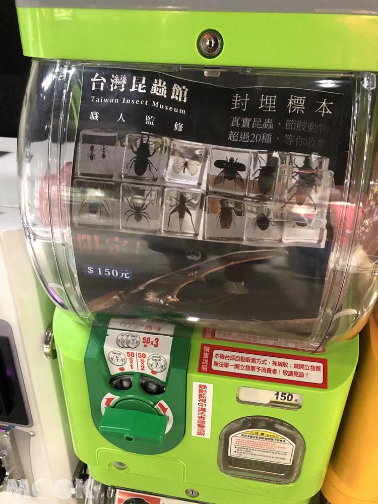 台灣昆蟲館 新竹館 扭蛋